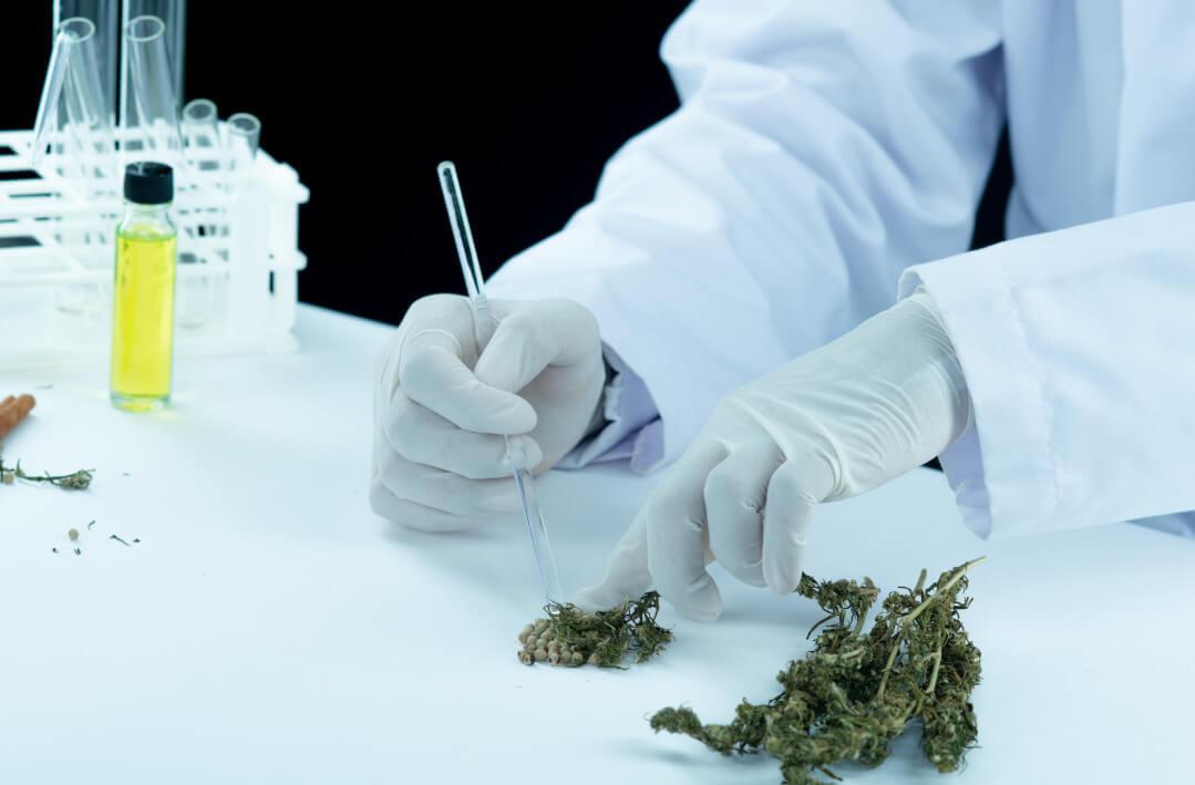 laboratoire-extraction-graine-chanvre